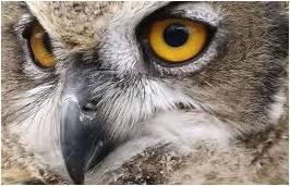 7ef42e4982f02 COMPROMISSO CONSCIENTE: Fato corriqueiro! Morte da coruja mascote ...