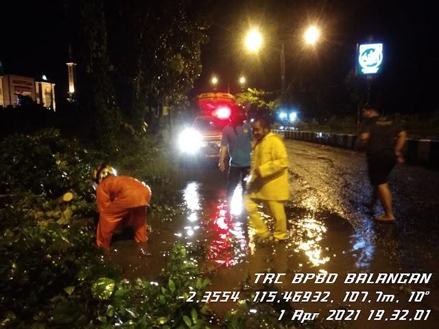 Hujan Disertai Angin Kencang di Balangan, Empat Titik Pohon Tumbang