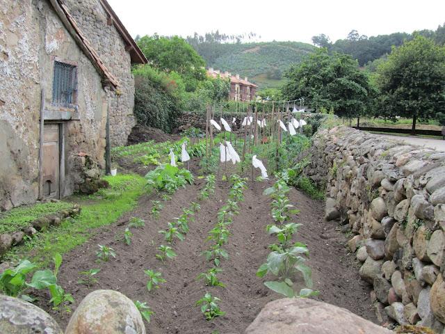 Paseo por Cartes (Cantabria) IMG_0943