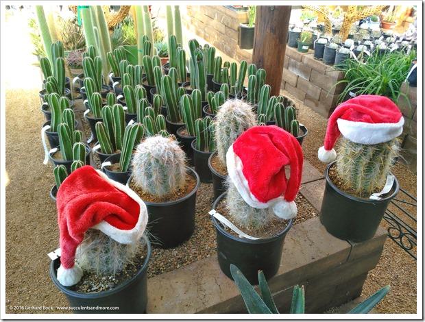 151230_Tucson_Mesquite-Valley-Growers_0051