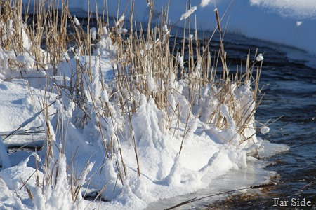 snowy reeds along Shell River