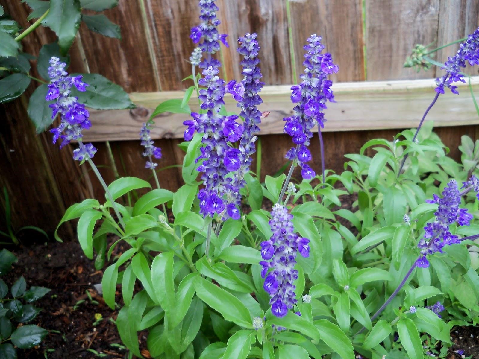 Gardening 2014 - 116_2588.JPG
