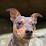 chase leibold's profile photo