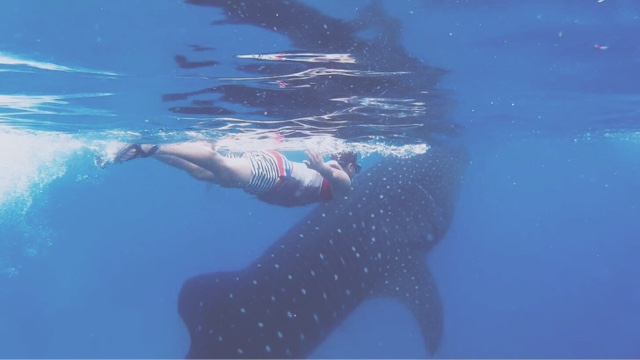 Swim with the Famous Oslob Whale Sharks