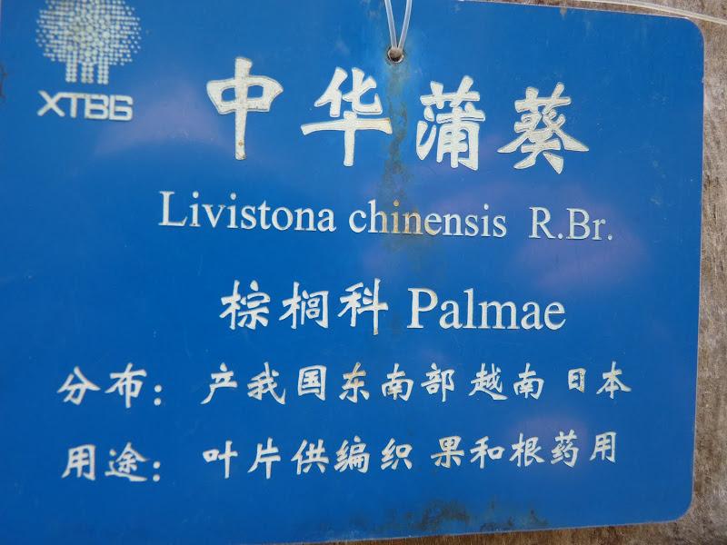 Chine .Yunnan . Lac au sud de Kunming ,Jinghong xishangbanna,+ grand jardin botanique, de Chine +j - Picture1%2B579.jpg