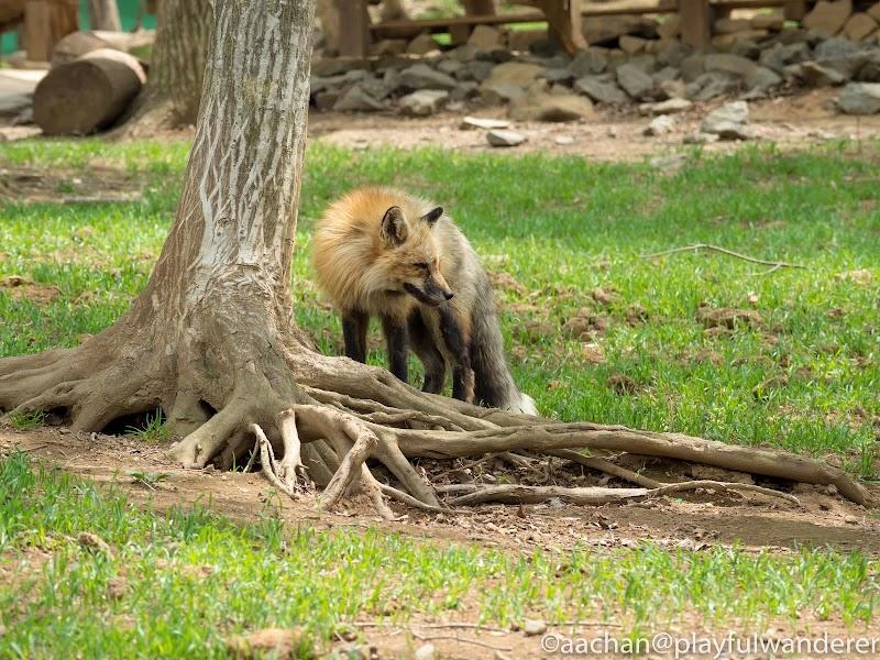 foxvil (26 - 70).jpg