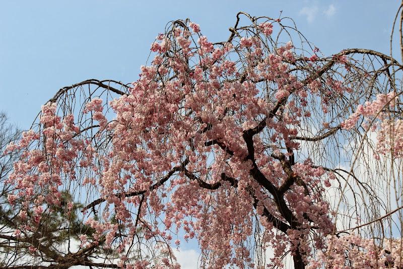 2014 Japan - Dag 10 - marjolein-IMG_1396-0170.JPG