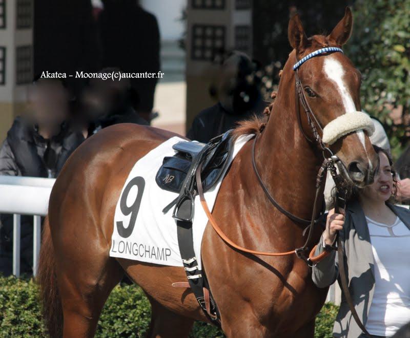 Photos Longchamp 6-04-2015  IMG_7803
