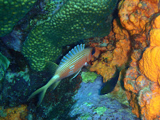 Really cool squirrel fish