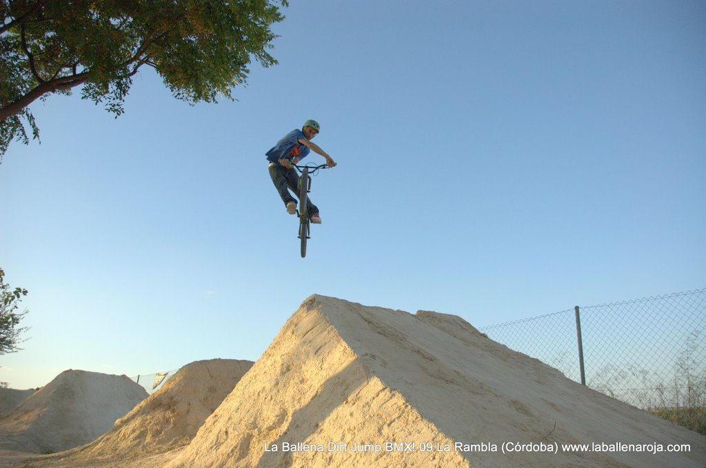 Ballena Dirt Jump BMX 2009 - BMX_09_0126.jpg