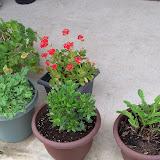 Gardening 2011 - 100_6828.JPG