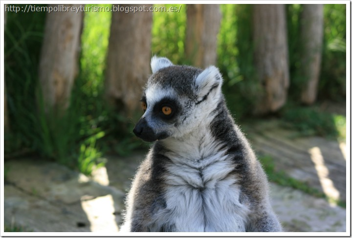 Bioparc-Valencia-Madagascar-10