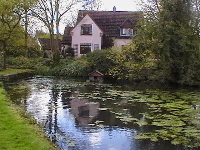 Moorhens on the Pond April 2008 - IMGA3955.jpg