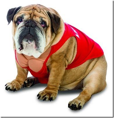 disfraces divertidos para perros  (1)