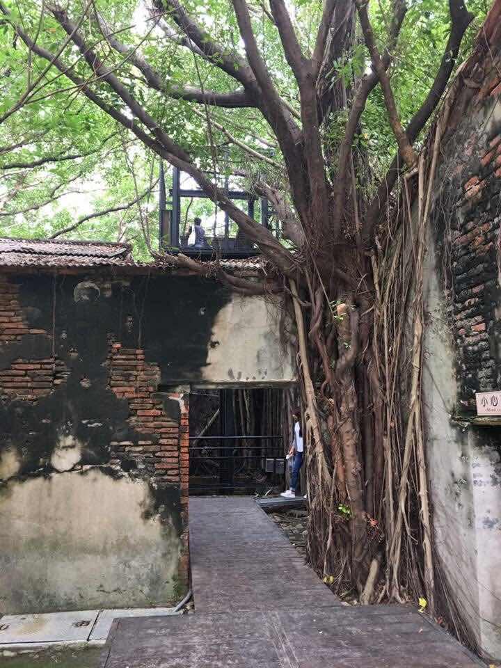 anping old fort fort zeelandia eternal golden castle tainan Taiwan anping tree house