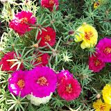 Gardening 2009 - 101_3786.JPG