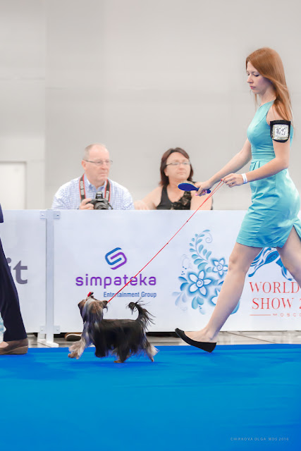 World Dog Show-2016 0052