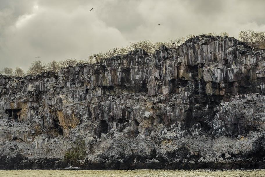 galapagos - Galapagos_FB_2-3.jpg