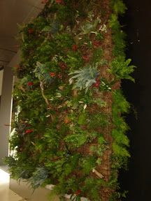 nous serons sur le salon d'Angers   salon du végétal 2010  le16 17 18 février pour présenter nos différentes méthodes pour réaliser des murs et toitures végétales en sphaigne
