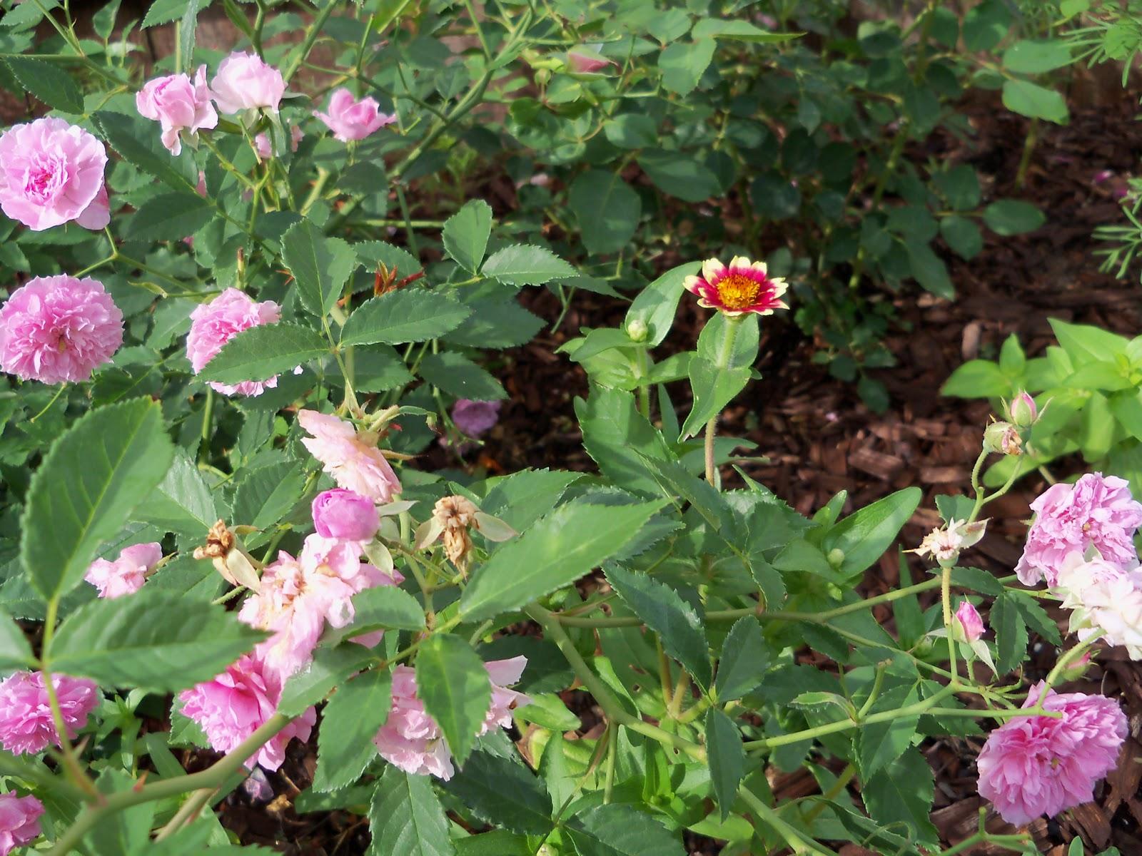 Gardening 2010, Part Two - 101_2209.JPG