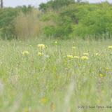 2013 Spring Flora & Fauna - IMGP6377.JPG