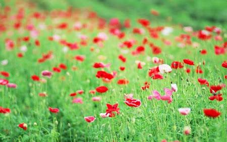 Album hình hoa cỏ dại ngát hương trong gió