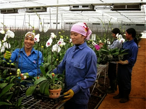 vuon+hoa%252Bdautay003 001 Ngỡ ngàng Vườn hoa nhiệt đới Mộc Châu