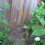 Gardening 2012 - 115_1814.JPG