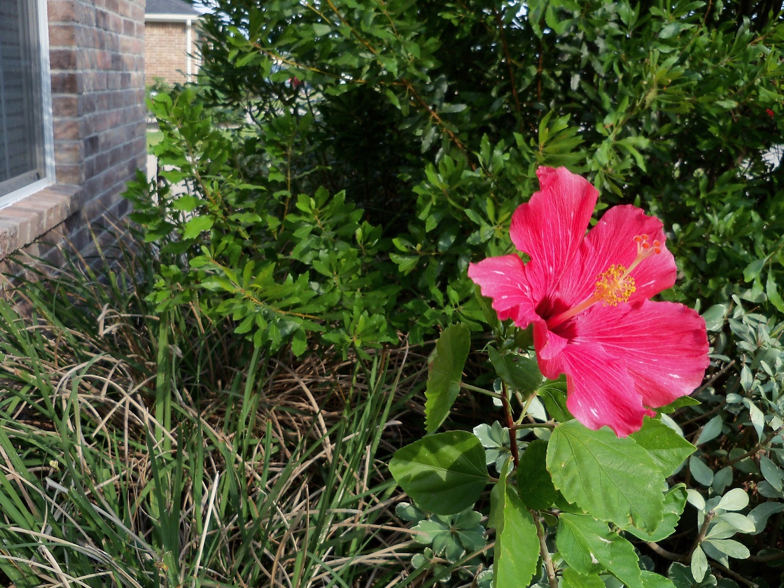 Gardening 2011 - 100_9195.JPG