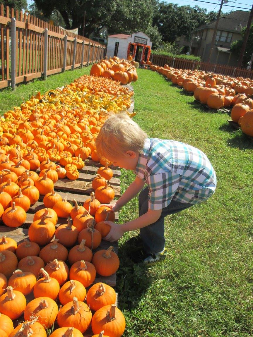 Pumpkin Patch 2015 - 12087066_10153209194967404_1528652810435736360_o.jpg