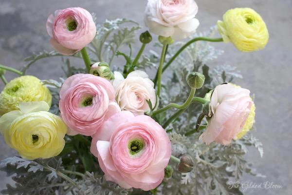 www.gildedbloom.com- The Spring Splendor of Ranunculus