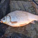 20140404_Fishing_Prylbychi_044.jpg