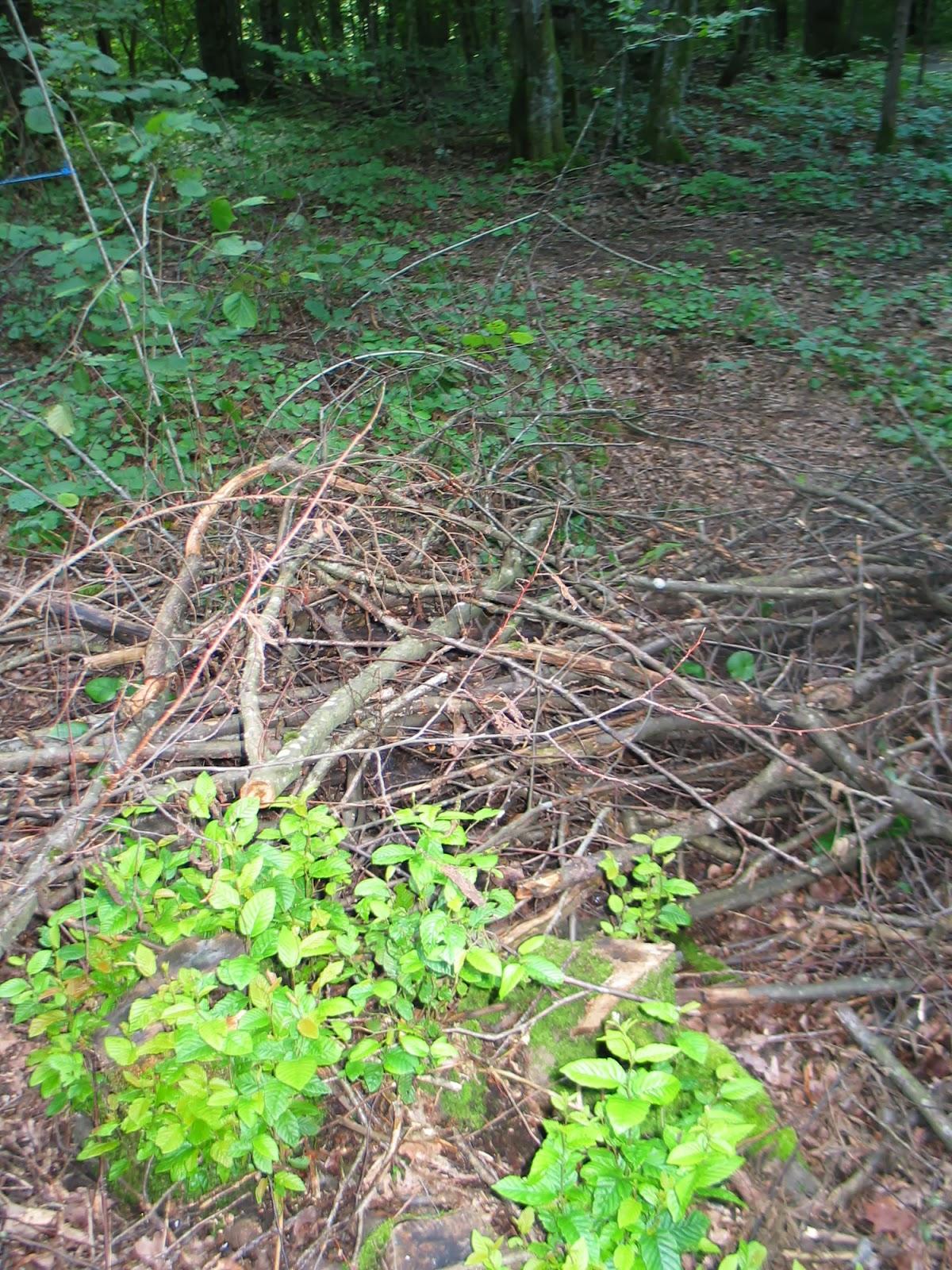 Taborjenje, Lahinja 2005 1. del - img_0978.jpg