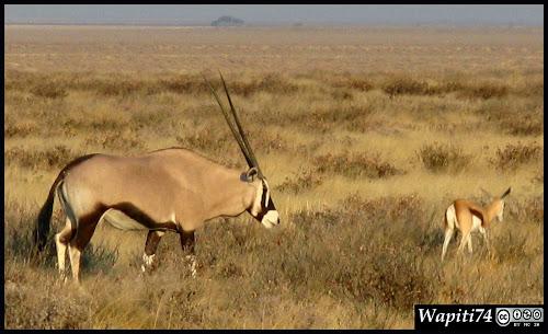 Balade australe... 11 jours en Namibie IMG_0401
