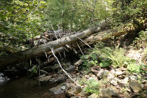 Zasypaný potok v Šútovskej doline