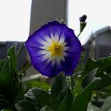 Gardening 2012 - 115_1603.JPG