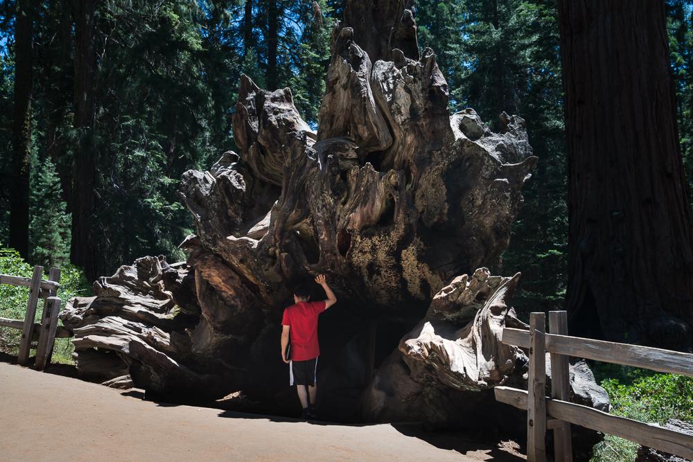 Sequoia NP, California