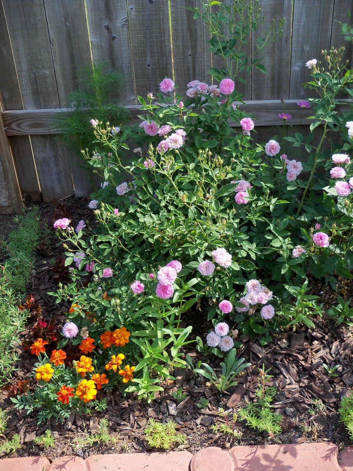 Gardening 2010, Part Two - 101_1931.JPG