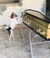 Bahia: Cachorro chora e acompanha velório da tutora ao lado do caixão
