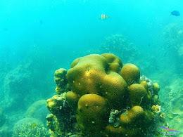 Pulau Harapan, 16-17 Mei 2015 GoPro  12