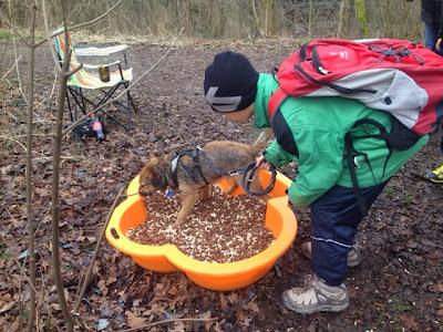 Suchaufgabe für Hunde am Plauschparcours