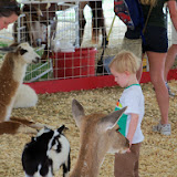 Fort Bend County Fair 2014 - 116_4279.JPG