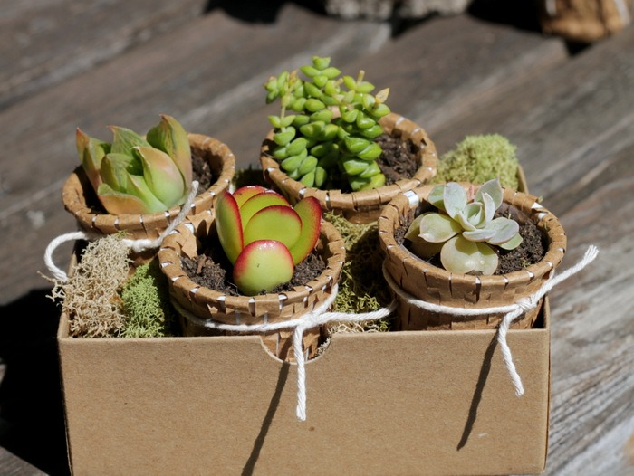 Recycled K Cup Succulent Pots - homework (1)