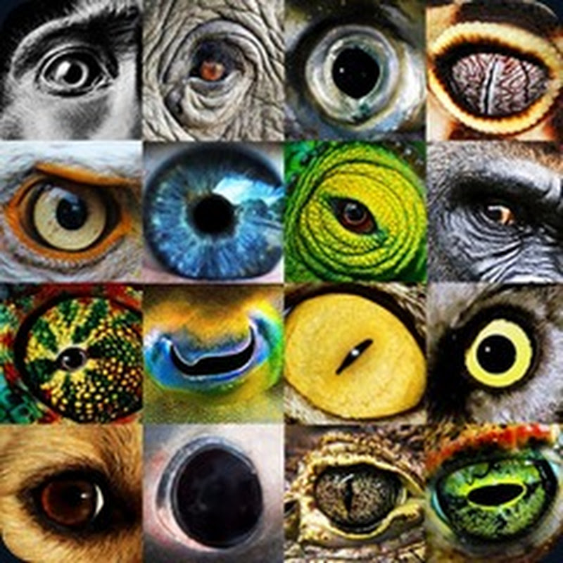Animals' Eyes Up Close.