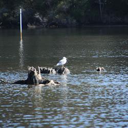 Fowl Marsh from Boat Feb3 2013 136