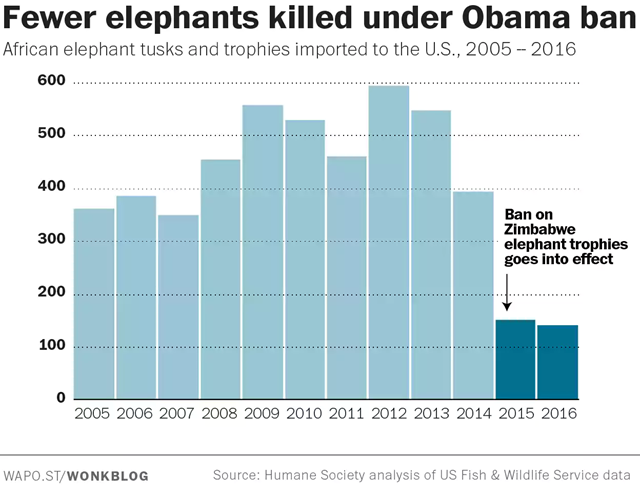 African elephant tusks and trophies imported to the U.S., 2005-2016. Fewer elephants were killed under the 2015 ban elephant trophy imports under President Obama. Graphic: The Washington Post