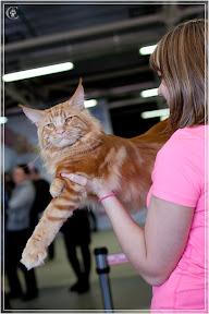 cats-show-24-03-2012-fife-spb-www.coonplanet.ru-019.jpg