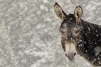 SEZ'ANE   L'hiver arrive...