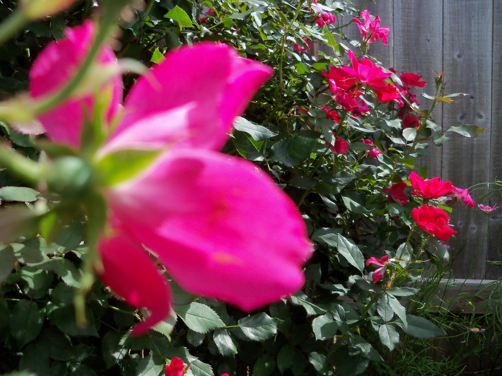 Gardening 2010, Part Three - 101_3815.JPG