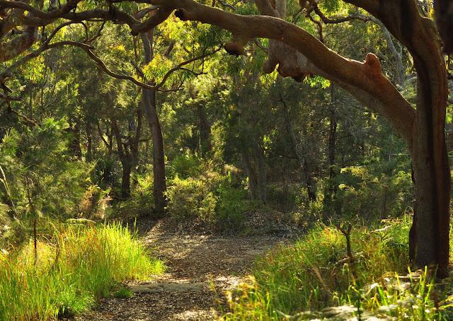 Chemin forestier du Mont Ettalong (entre Umina et Pearl Beach), New South Wales (Australie), 20 novembre 2010. Photo : Barbara Kedzierski